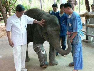อนุรักษ์ช้างไทยไปกับ one fine day