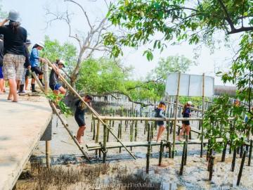 อาสาปลูกป่าชายเลน สร้างแหล่งอนุบาลสัตว์น้ำ (๔ มิ.ย.) ไป-กลับ