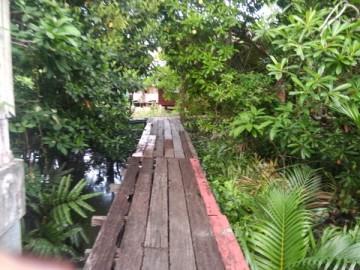 ปรับปรุงพื้นที่ป่าเพาะกล้าไม้ในกรุง 18 มิย Plantation and gardening volunteer