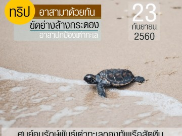 ขัดอ่าง ล้างกระดอง อาสาปกป้องเต่าทะเล