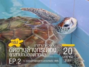 ขัดอ่าง ล้างกระดอง อาสาปกป้องเต่าทะเล Ep.2