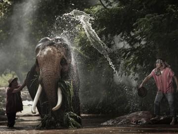 ค่ายเขลางค์นครอาสา คนสร้างฝายให้ช้าง จ.ลำปาง (24-25 ก.พ)