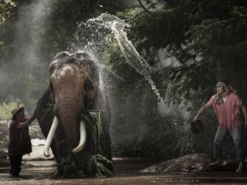สร้างฝายช่วยช้างให้มีน้ำกิน จ.กาญจนบุรี (2 ก.ย.)
