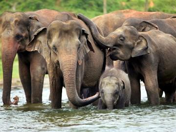 จิตอาสา สร้างฝายช่วยช้างให้มีน้ำกิน อาทิตย์ ๓ มี.ค.