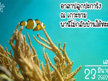 อาสาปลูกปะการัง ณ เกาะขาม พานีโม่กลับบ้านใต้ทะเล