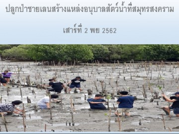 ปลูกป่าชายเลนสร้างแหล่งอนุบาลสัตว์น้ำที่สมุทรสงคราม เสาร์ 2พย.62